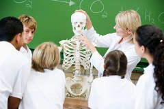 Students in biology class